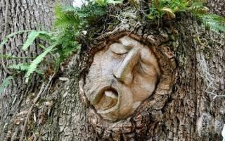 Гороскоп друидов: природные покровители по дате рождения. Полный гороскоп друидов по дате рождения — узнай свое дерево-покровителя
