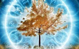 С какого дерева вы упали по дате рождения. Как узнать свой камень, тотемное животное и дерево-талисман
