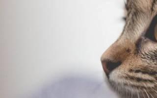 Молитва после смерти животных