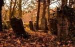 Что значит видеть во сне кладбище. К чему снится кладбище и могилы родственников
