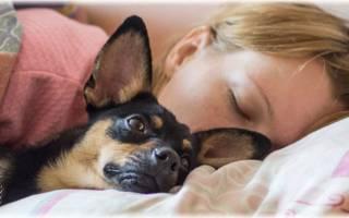 Во сне укусила собака: толкования деталей сна. Приснилась собака: добрый ли это знак