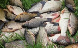 Молитва рыбака для ловли рыбы