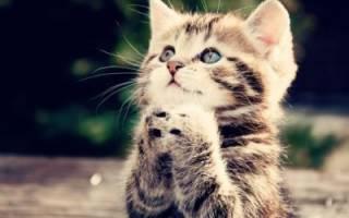 Молитва потерялся кот