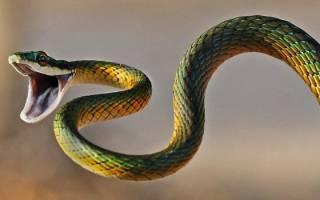 Толкование снов змея укусила. К чему снится укус змеи и стоит ли насторожиться