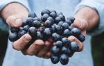 К чему снится видеть виноград. Приснился виноград во сне