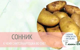 К чему снится чистить картошку? Сонник подскажет! Картошка толкование сонника.