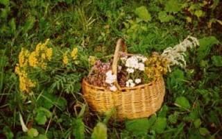 Молитва на лекарственные травы